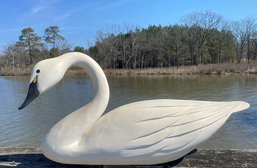 "F109 Oversize hand carved Swan from Dorchester County Maryland, signed by "" Danny Brannock"" Swan is hollow carving with raised wings feathers and the most beautiful turned neck and tilted head, The paint is a antiqued white which add to the beauty of the Swan"