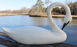 C608 Eastern Shore  Maryland  hand carved  Swan, with a very graceful turned neck,with a swipping upper tail, it is hollow body