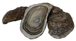 D58  Three hand carved wooden Folk Art  Oyster, found on the Eastern Shore of Maryland, two unshelled oysters with one open