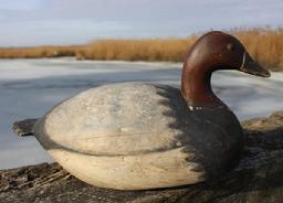 RM702 Rare Oversized Canvasback drake decoy by Ira Hudson (1876-1949), Chincoteague Island, VA. nice football shaped body with fluted tail, tack eyes, old paint was professionally taken down and strengthened.